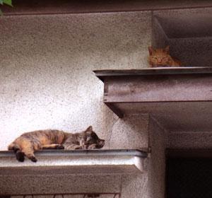 コゲとチビトム屋根3.jpg
