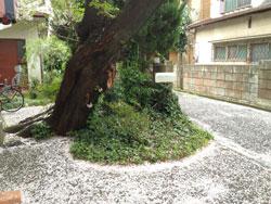 2012sakurafubuki_kinosita.jpg