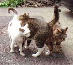 3cats.jpg
