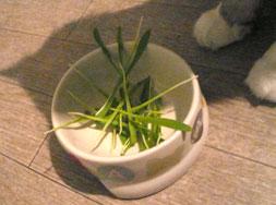 catgrass3.jpg