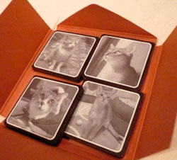cats-choco2.jpg