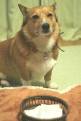 fuku_kuruta1.jpg