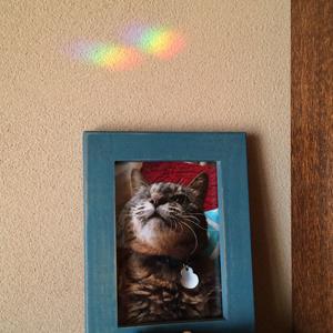 koge_rainbow.jpg