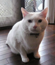 kutsuki_cat_h.jpg