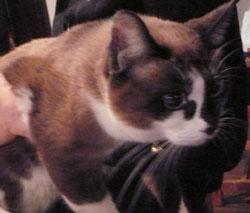 kutsuki_cat_k.jpg