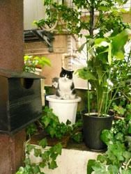 malle_cats.jpg