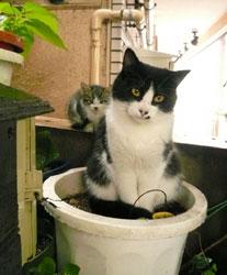 malle_cats1.jpg