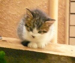 malle_cats2.jpg