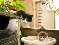 malle_cats3.jpg