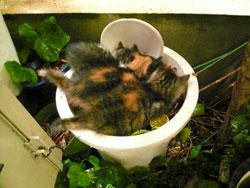 malle_cats4.jpg