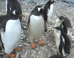 penguin's-famiry.jpg