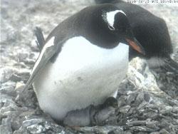 penguinhina1215.jpg