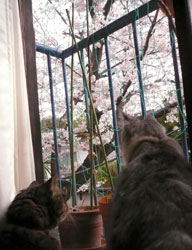 sakura2009_cats.jpg