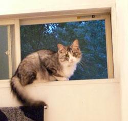 window-cat.jpg